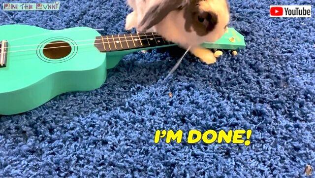 rabbitplaysguitar6_640