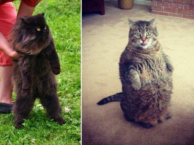 standing-cats9_e