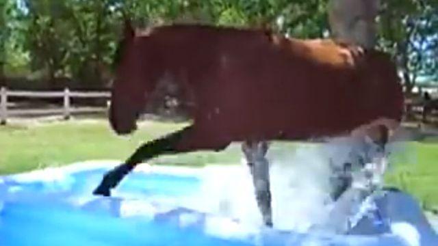 paddlinghorse3