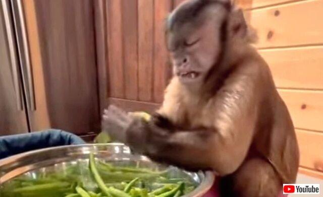 monkey4_640