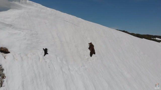 bearcub3_e