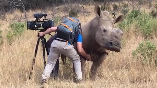 rhino-1_e