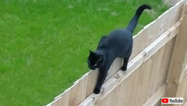 blackcats5_640