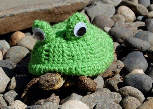 sweater-tortoise-frog_e