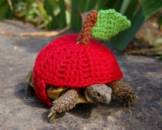 sweater-tortoise-apple_e