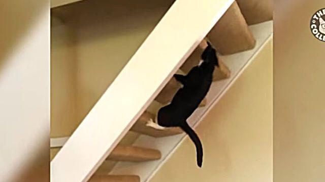 climbingcat3