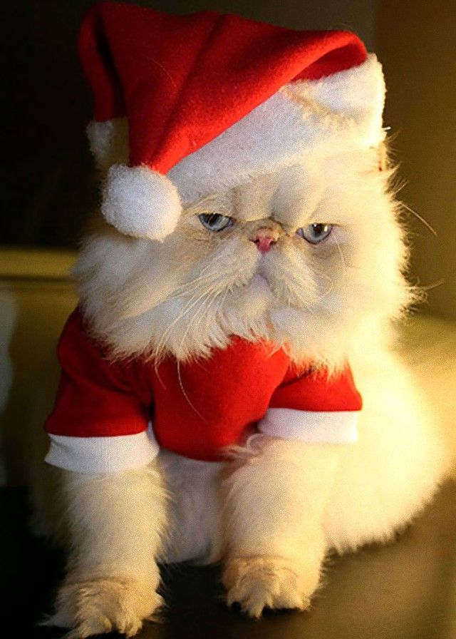 Cute-Christmas-Animals-38_e