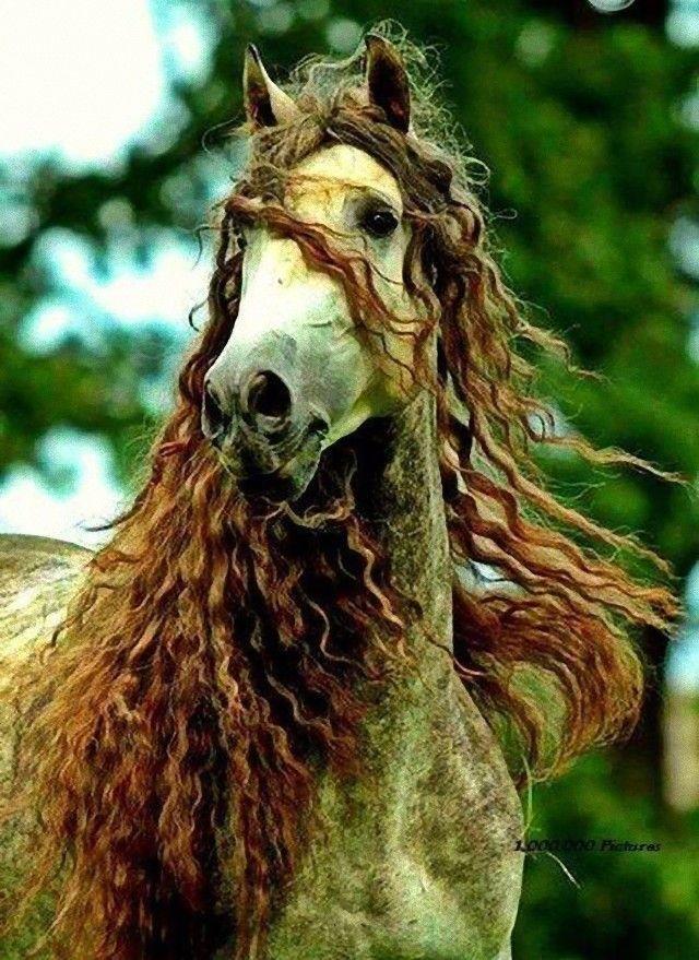 horse4_e