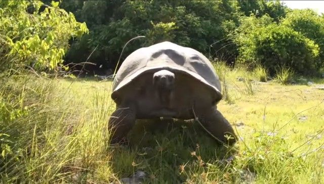 matingtortoises7_e