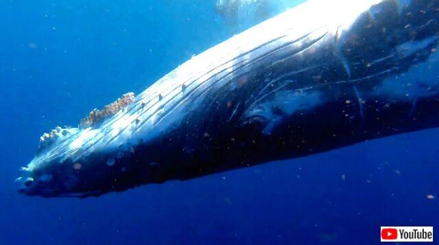 humpbackwhale4_640