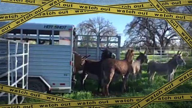 burro1-frame