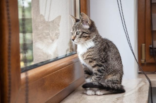 cat-3 [www.imagesplitter.net]