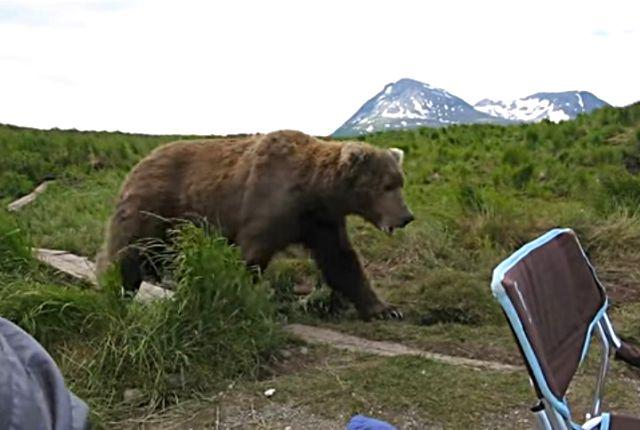 bearinalaska1