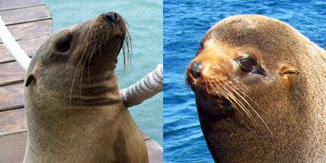 seal-or-sea-lion-difference-comparison_e