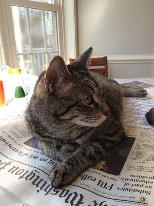 cats-vs-reading8_e