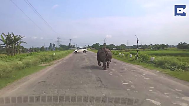 rhino0