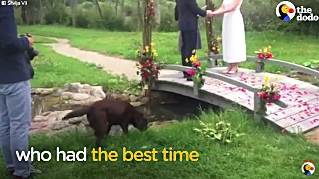 weddingdog2