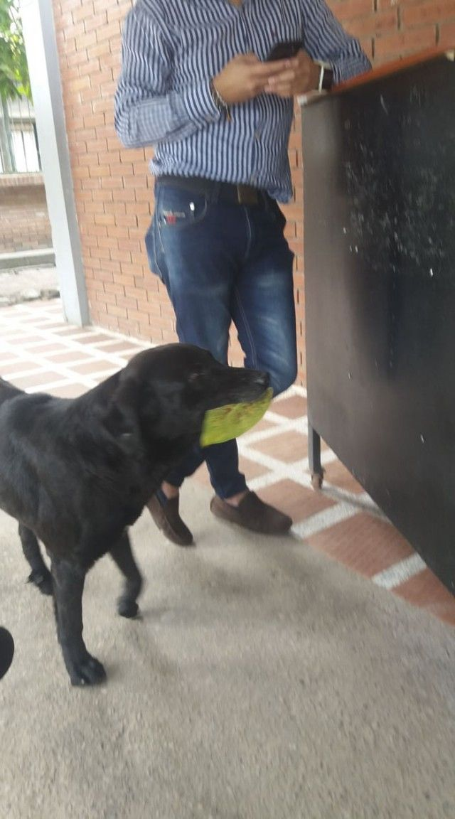 dog-buy-treats-leaves-negro-colombia-1-5af2e230e91a6__700_e