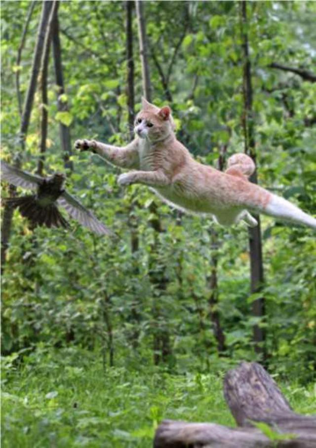jump-3 [www.imagesplitter.net]