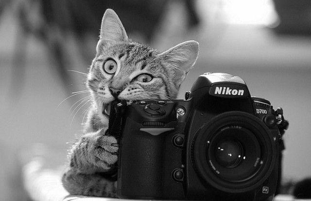 photographers17_e