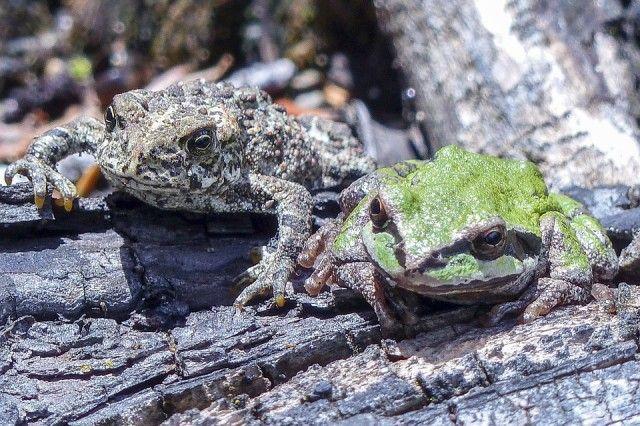 toad-355054_960_720_e