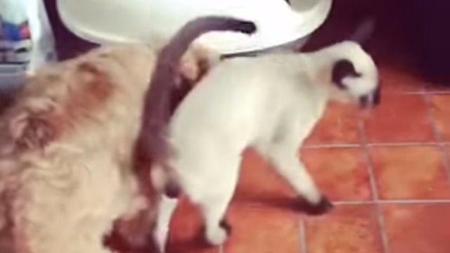 stuckcat3