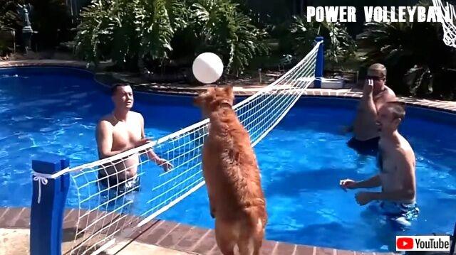 volleyball5_640