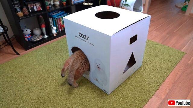 cozybox2_640