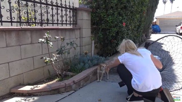 homelessdog4_e