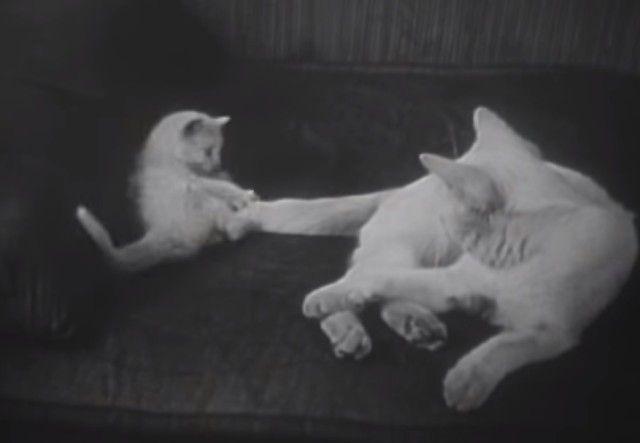 1947cats19_e