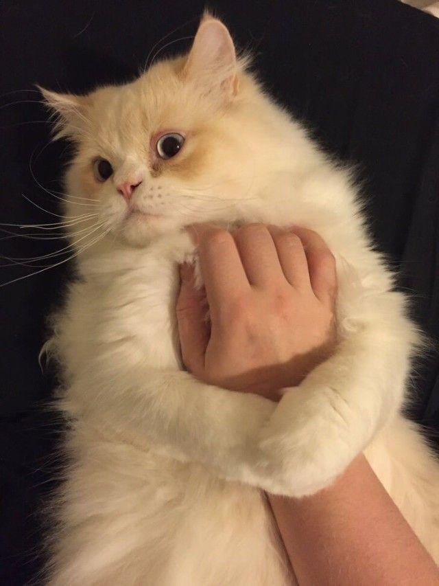 cats-3 (1)