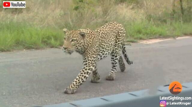 cheetahnleopard3_640