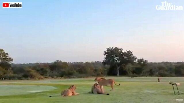 golfclub2_640
