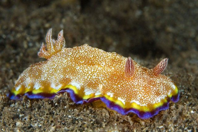sea-slugs-103__880_e