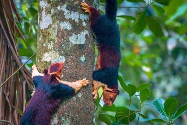 Multicoloured-squirrel2_e