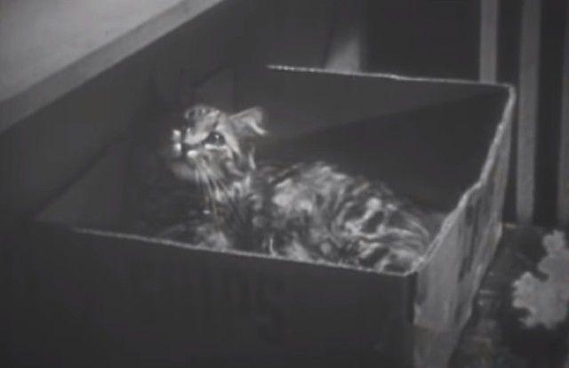 1947cats6_e