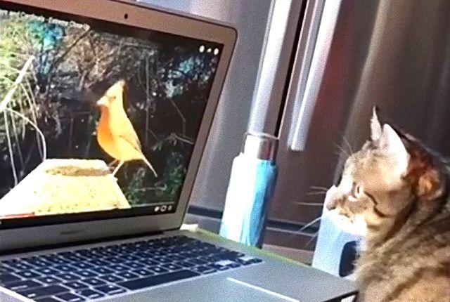 birdwatchingcat1_e