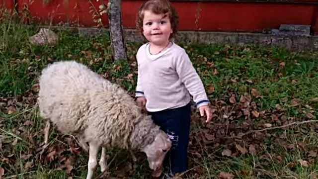 sheepnboy3