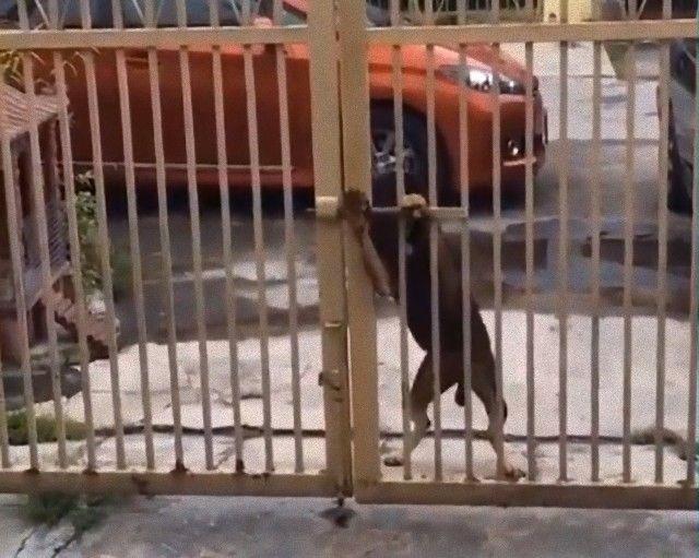dogsncatscute5_e