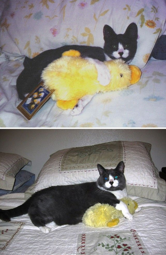 pets-growing-up-with-toys-3__700_e
