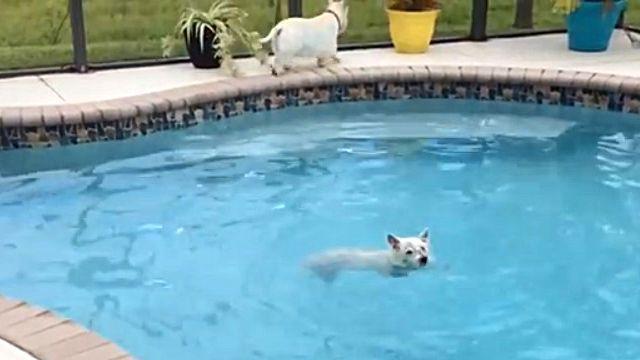 pooldog6