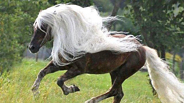 horse3_ea