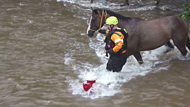 floodhorse6
