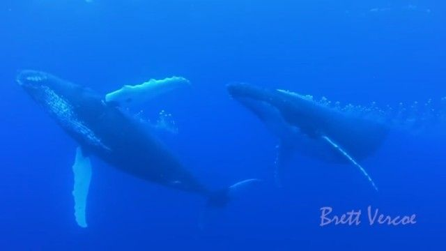swimwithwhales1_e