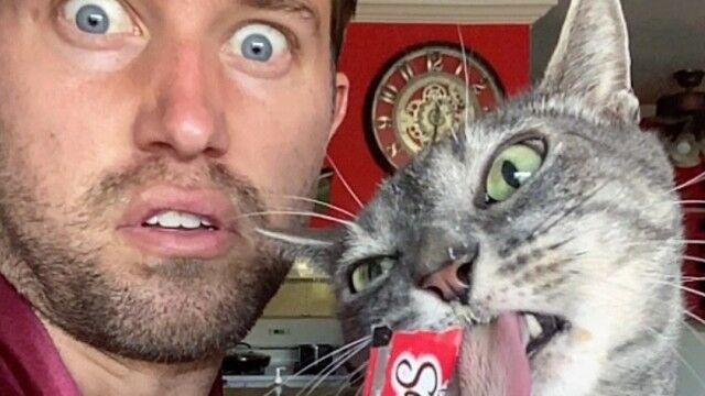 猫を愛する猫飼いネイサンさんの愛猫ピクルスさん、そのオコ顔が人気で個別インスタグラム爆誕か