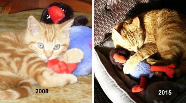 cat-toy-before-after__700_e