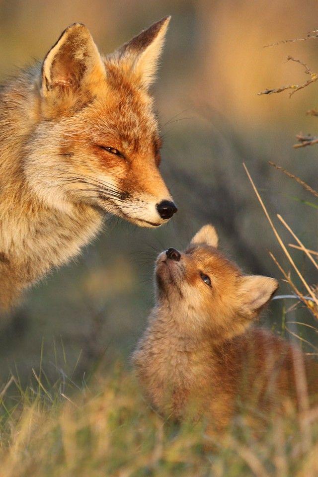 fox12_e