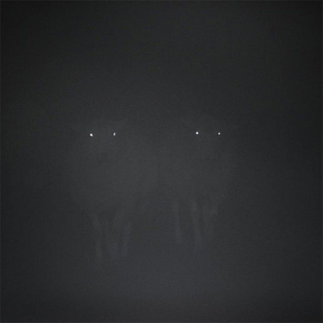 creepy-sheep18_e