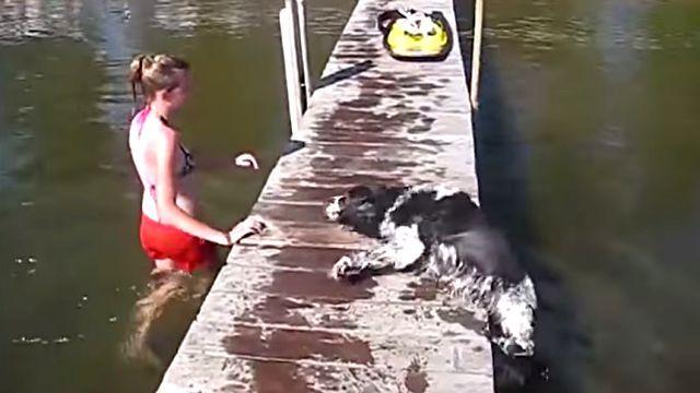 dogfailer7