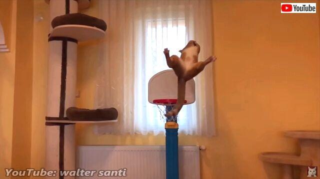 basketballcats3_640